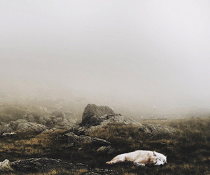 ghost and direwolf image