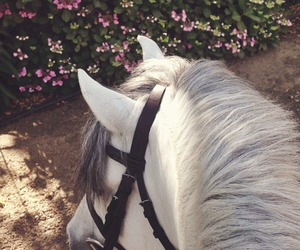 equestrian, white, and flower image