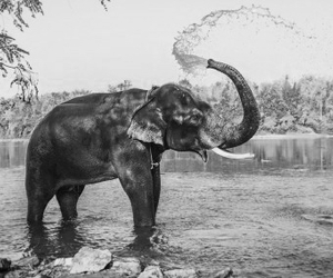 elephant, water, and white image