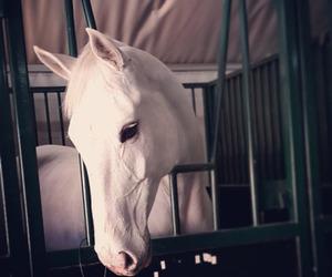 Dream, equestrian, and white image