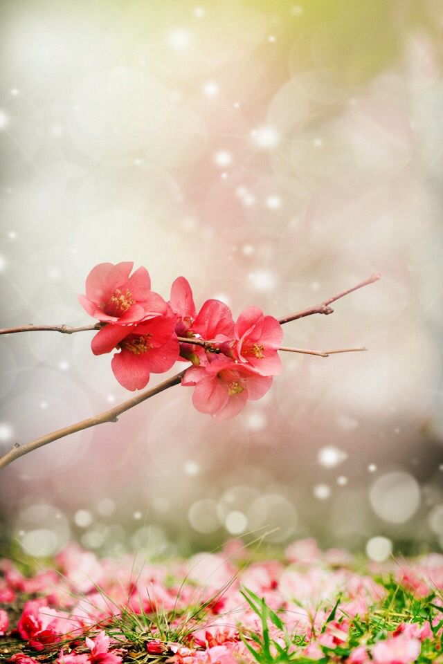 flowers, wallpaper, and beautiful image