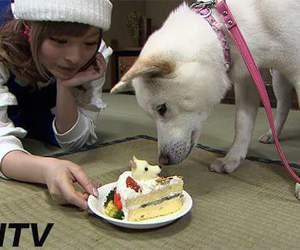 dog and kyary image