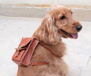 dog, backpack, and funny image