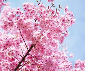 flower, pink, and orhidea image