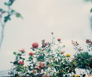 film, flowers, and garden image