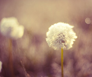 artsy, dandelion, and photography image