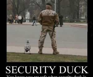 funny, duck, and lol image