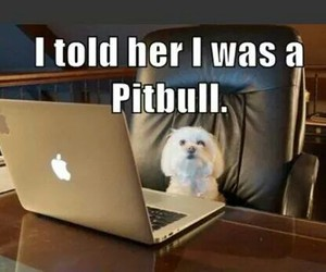 funny, dog, and pitbull image