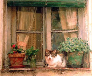 cat, rustic, and window image