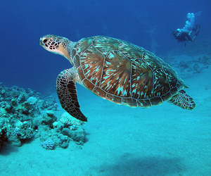 coral reef, marine life, and scuba diving image