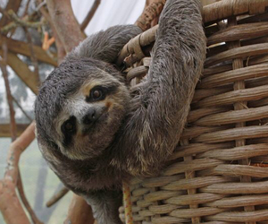 animals, sloth, and tumblr image