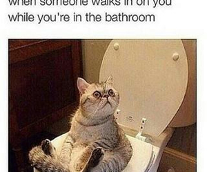 funny, cat, and bathroom image