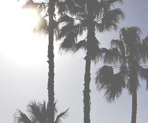 beautiful, palms, and 2015 image