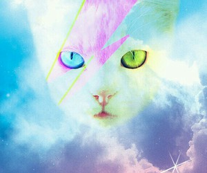 cat, hipster, and wallpaper image