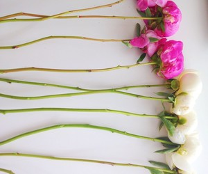 flowers, sweet, and vintage image