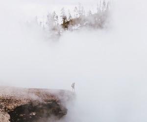 35 mm, fogg, and dog image