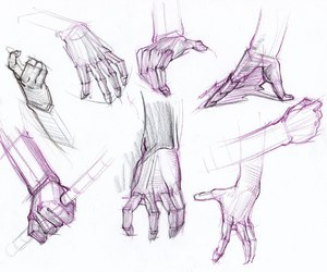anatomy, drawing, and human anatomy image