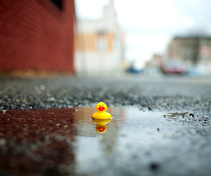 cute, duck, and puddle image