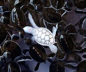 turtle, white, and animal image