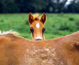 horse, mare, and peek-a-boo image