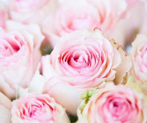 flowers, macro, and pink image