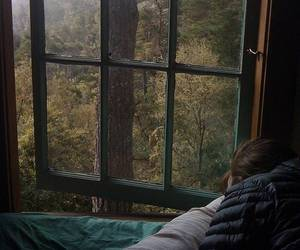 forest, window, and nature image