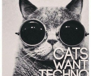 cats, life, and rave image
