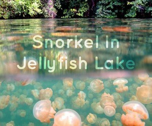 jellyfish, lake, and pink image