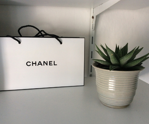 beautiful, cactus, and chanel image