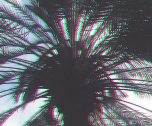 branches, hollywood, and palm tree image