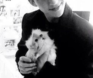 guinea pig, troye sivan, and cavy image