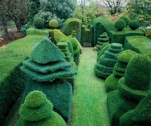 garden, green, and bush image