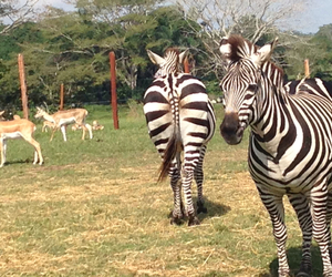 cool, photobyme, and zebras image