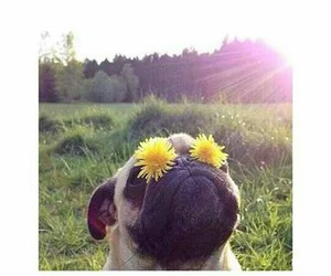 haters, dog, and flowers image