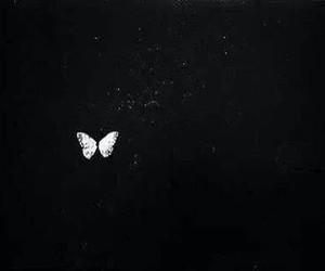 batter fly image