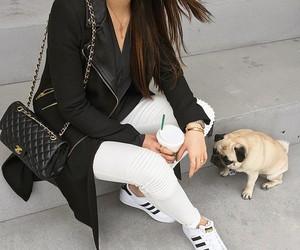 fashion, adidas, and dog image