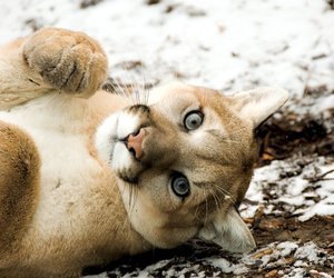 adorable, COUGAR, and i want image