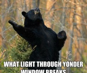 bear, funny, and shakespeare image