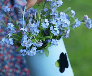 beauty, flowers, and forget me not image