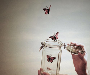 butterflies, jar, and pretty image