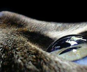 cats art eyes image