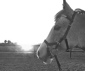 horse, pony, and spring image