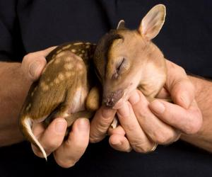 sweet and bambi image