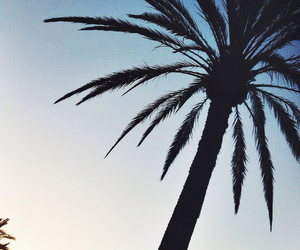 palms, summer, and love image