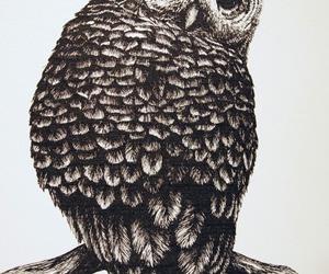 animals, black & white, and draw image