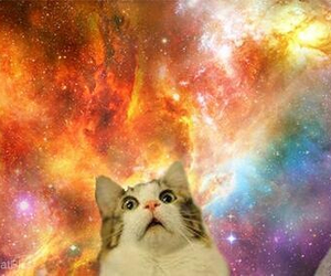 cat, space, and funny image