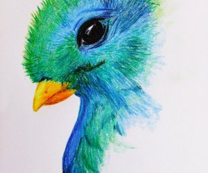 drawing, freedom, and quetzal image