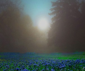 beautiful, flowers, and foggy image