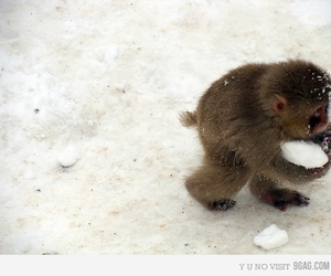 monkey, cute, and snow image