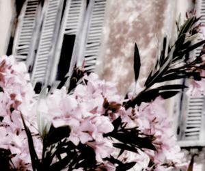 flowers, header, and headers image